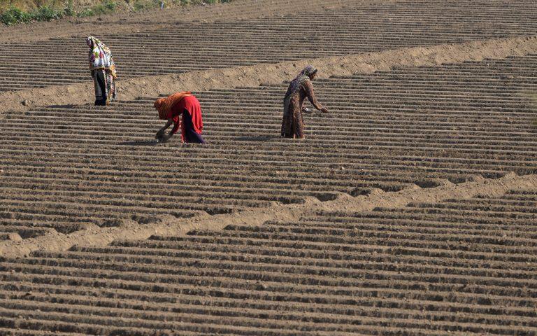 Pakistani women work in a rice field ahead of the International Day of Rural Women